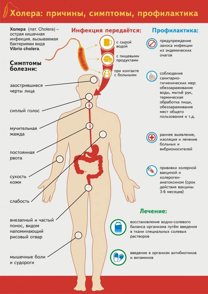Причины и симптомы холеры