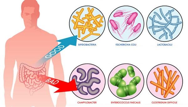 Хорошие и плохие микроорганизмы