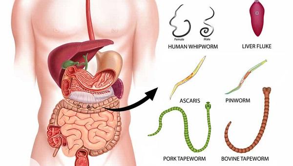 Микроорганизмы попавшие в организм