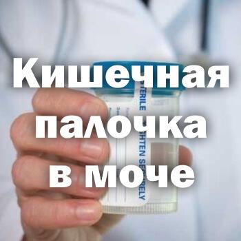 Кишечная палочка в моче - причины и лечение
