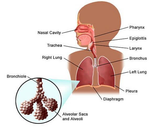 Туберкулез внутренних органов