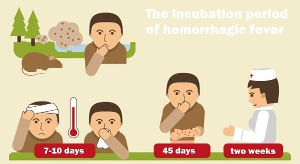 Симптомы геморрагической лихорадки