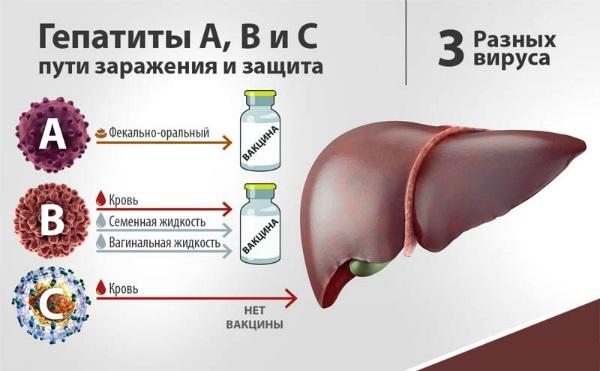 Пути инфицирования гепатитом